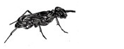 Winged Terrestrial Arthropods Series