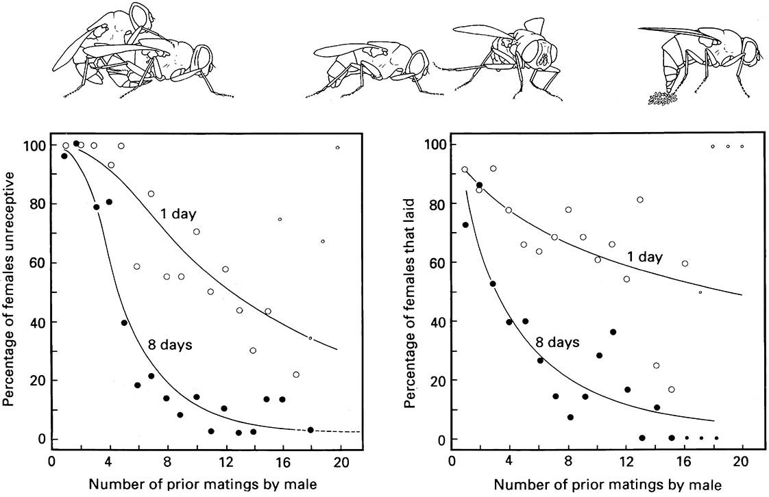 Control of mating and oviposition in a blow fly