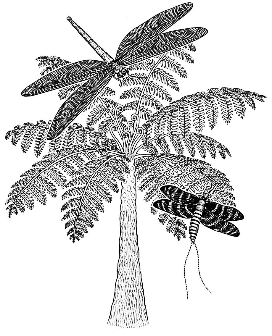 Reconstructions of giant Carboniferous insects. (Inspired by a drawing by Mary Parrish in Labandeira 1998.)