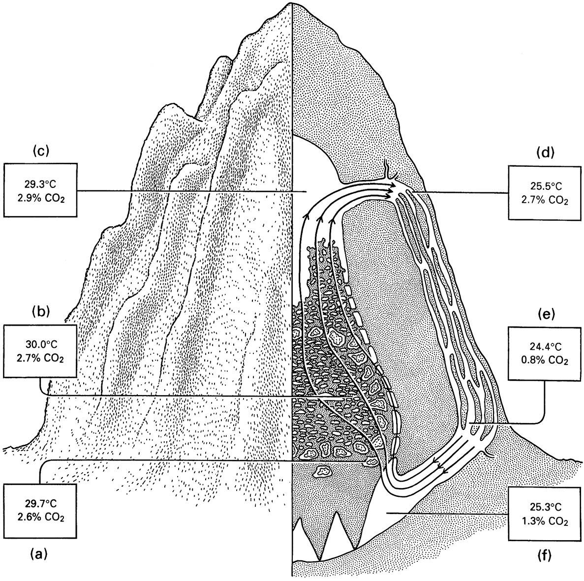 Section through the mound nest of the African fungus-farming termite Macrotermes natalensis (Isoptera: Termitidae) showing how air circulating in a series of passageways maintains favorable culture conditions for the fungus at the bottom of t he nest (a) and for the termite brood (b).
