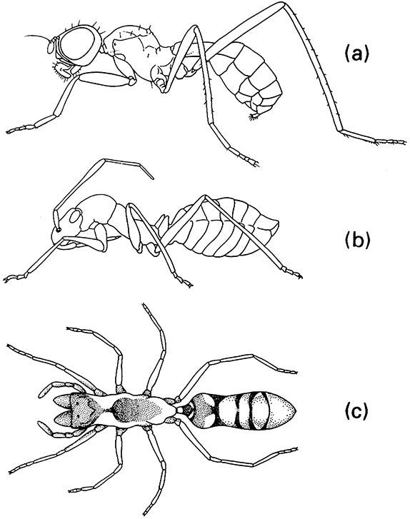 Three ant mimics: