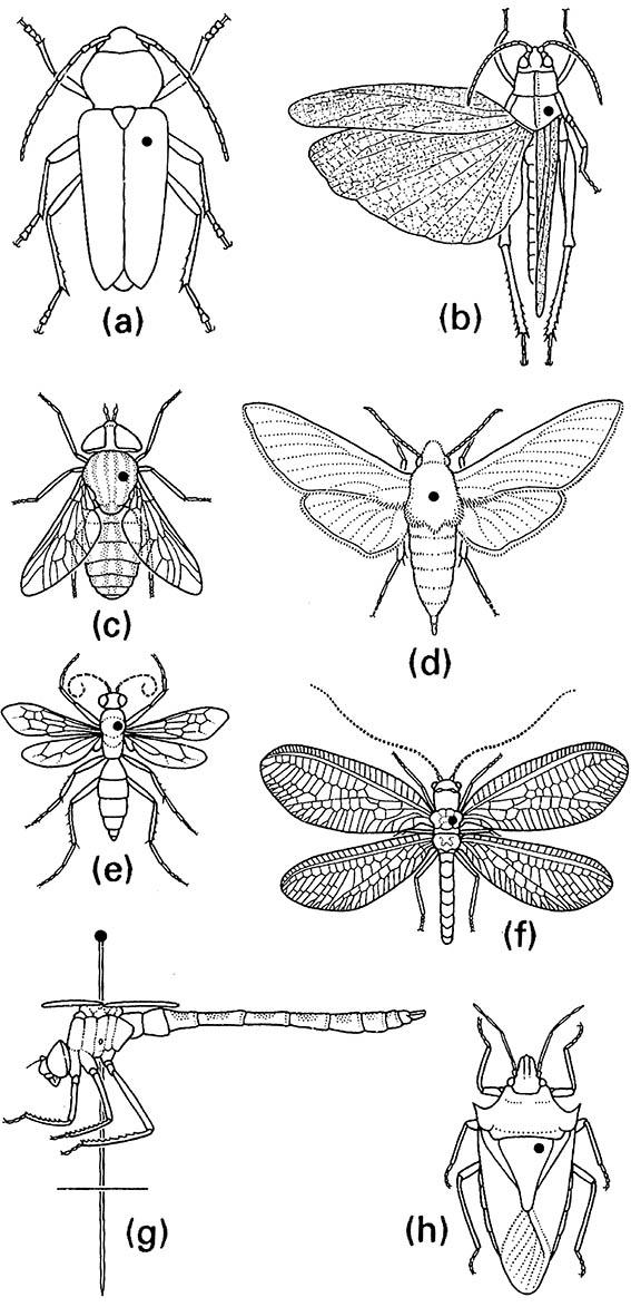 Pin positions for representative insects:
