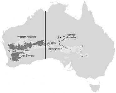 Modeled distribution for Austrochlus species (Diptera: Chironomidae) based on presence data.