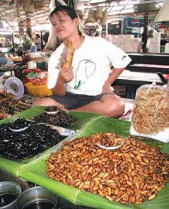 Food insects at a market stall in Lampang  Province, Thailand, displaying silk moth pupae (Bombyx mori), beetle pupae, adult hydrophiloid beetles, and water bugs, Lethocerus indicus .