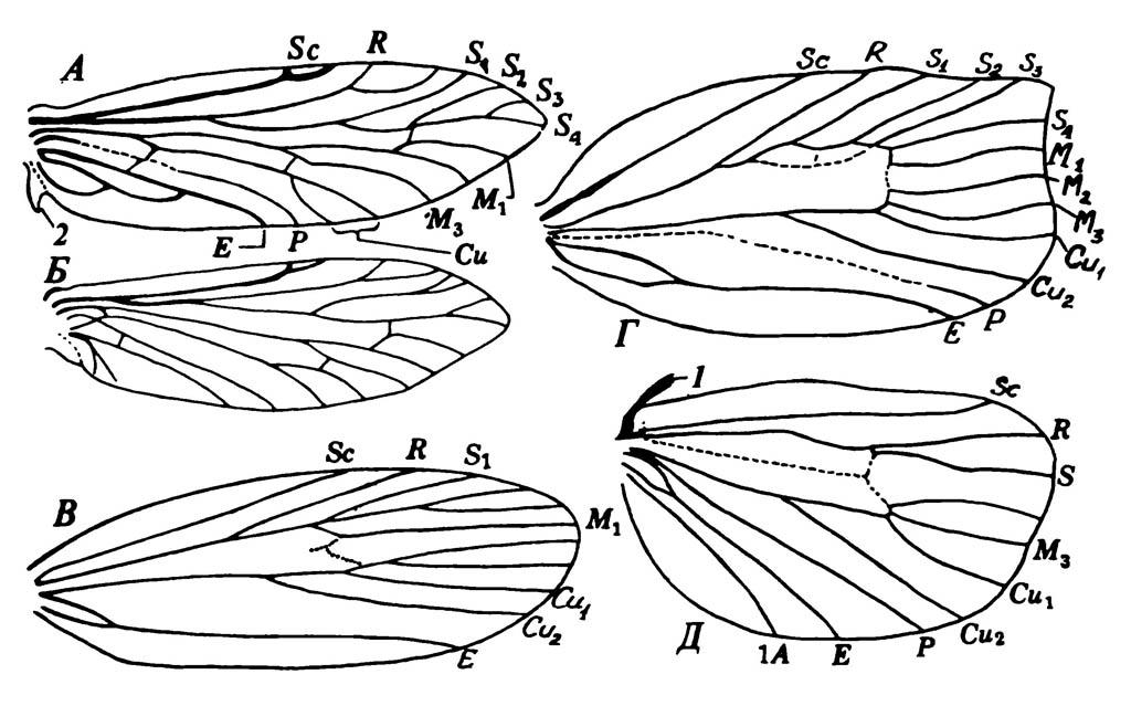 Крылья Lepidoptera