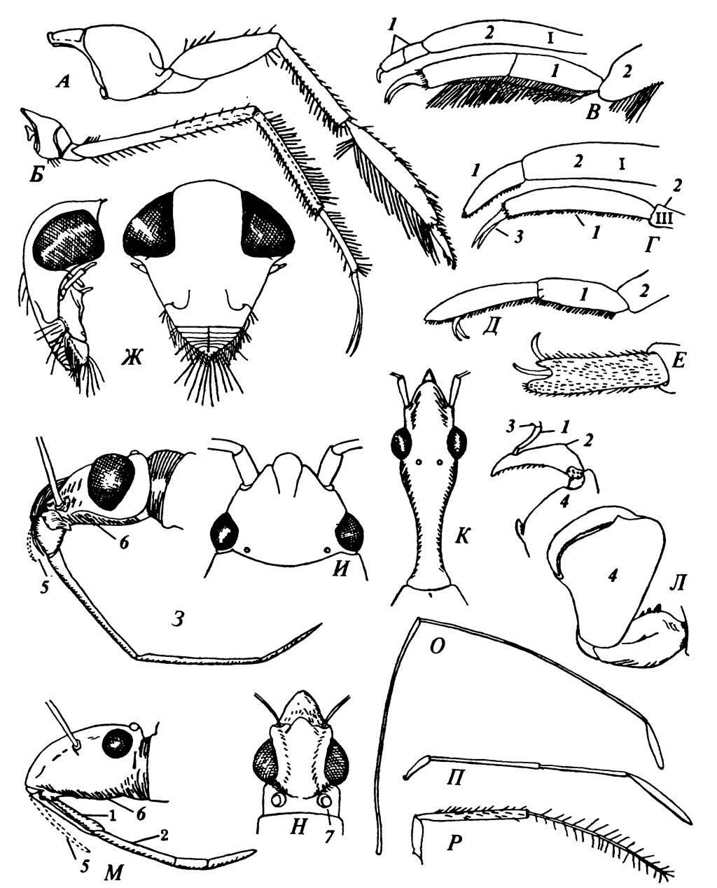 Особенности строения некоторых Hemiptera